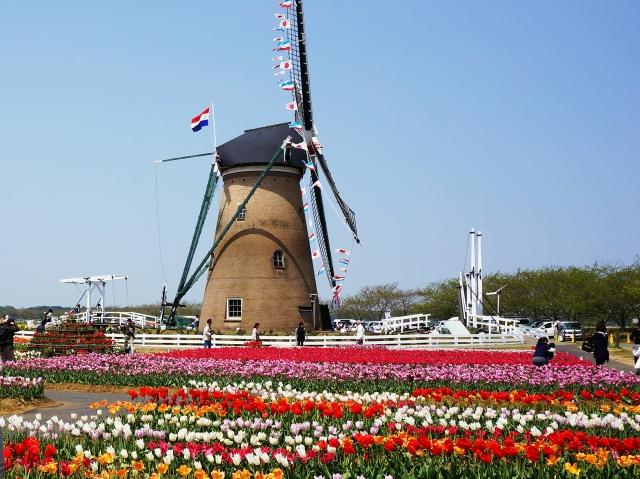佐倉市のオランダ風車