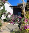 四季折々の植栽も魅力。当社平屋モデルハウスのご紹介